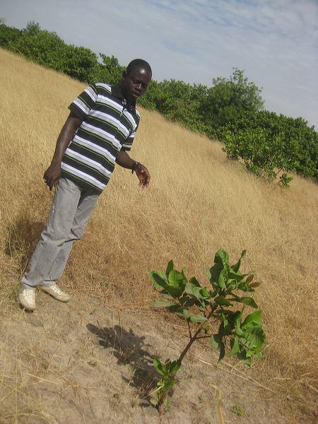 2012-mangrove-4