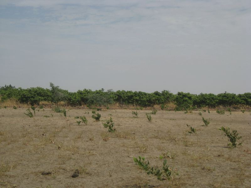 2012-mangrove-7