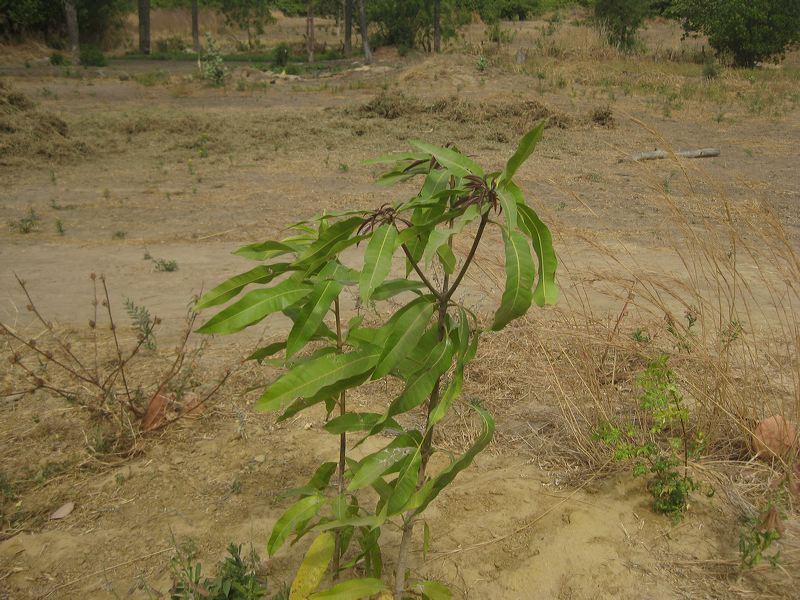 2012-mangrove-8