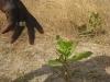2012-mangrove-6