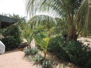Le jardin de Kaydara